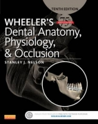 Wheeler's Dental Anatomy, Physiology and Occlusion 10th Ed