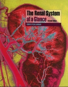 The Renal System at a Glance
